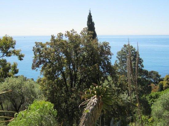 Giardini Botanici Hanbury: vista  3