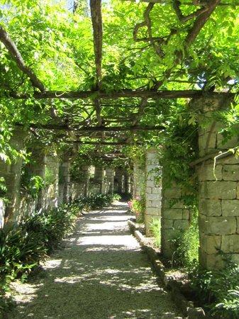 Hanbury Botanic Gardens (Giardini Botanici Hanbury): glicini