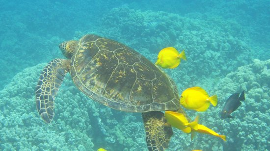 Blue Wilderness Dive Adventures: Turtle Cleaning Station