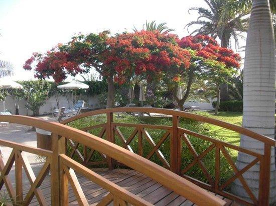 Hotel Riu Palace Maspalomas: jardin patio