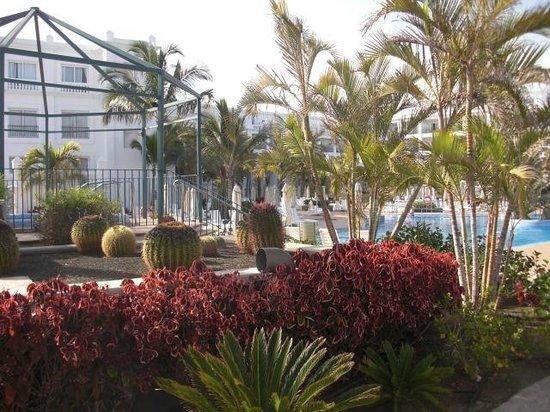 Hotel Riu Palace Maspalomas: jardin de cactus au bord de la grande piscine