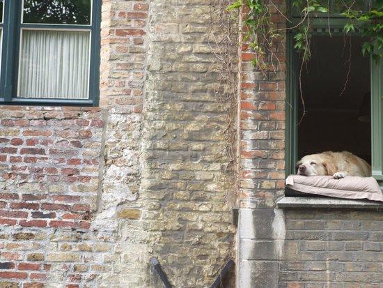 Boottochten Brugge: Нелегка служба сторожа канала.