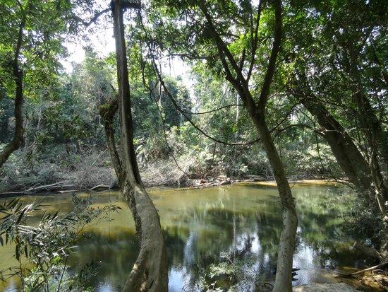 Taman Negara National Park : Rivière longeant le resort du parc