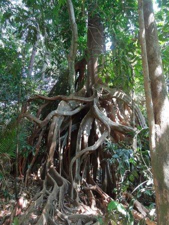 Taman Negara National Park: Une végétation unique