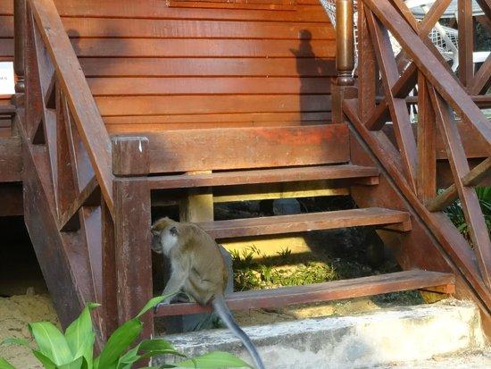 Mutiara Taman Negara : Housekeeping