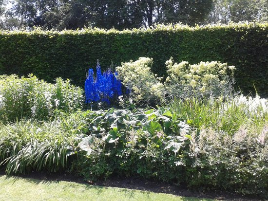 Anglesey Abbey: Delphiniums really were this blue!