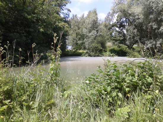 Anglesey Abbey: The lake with carp