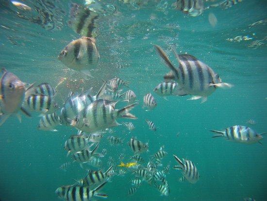 Captain Nemo Guesthouse: prise de vue sous marine