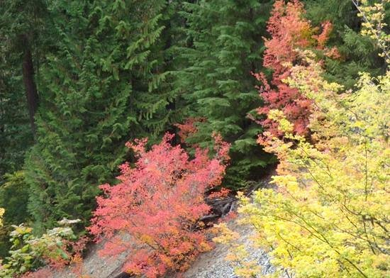 Alta Crystal Resort at Mount Rainier: A few fall colors along the White River Trail