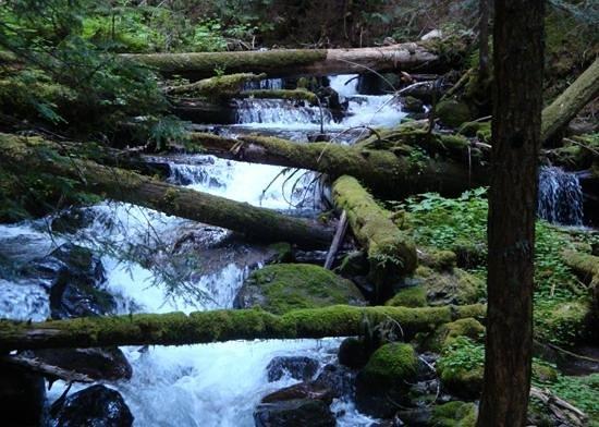 Alta Crystal Resort at Mount Rainier : Deep Creek, a gorgeous mountain stream, runs through the resort