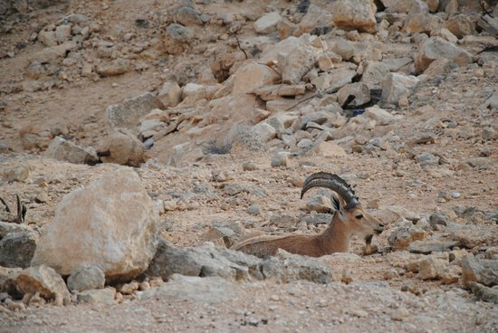 Ramon Crater: We were graces by their presence
