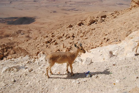 Ramon Crater: the baby