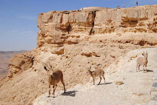Ramon Crater : the family