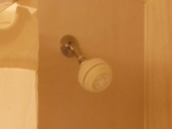 "Comfort Inn Shady Grove: Same old ""too low"" shower heads"