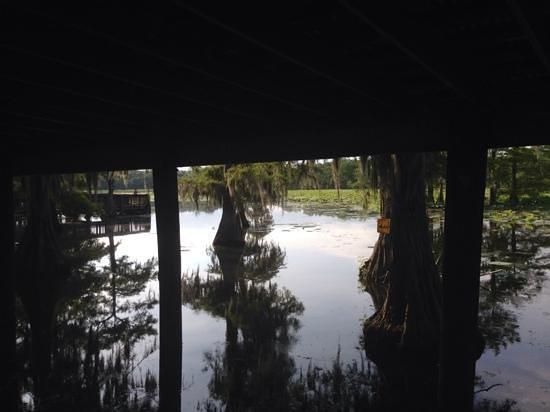 Ville Platte (LA) United States  City pictures : ... area Picture of Chicot State Park, Ville Platte TripAdvisor