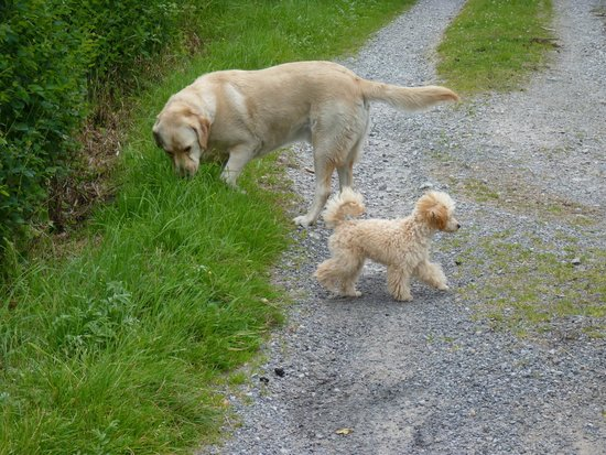 Abocurragh Farm Bed and Breakfast : Kiki and Max became great friends