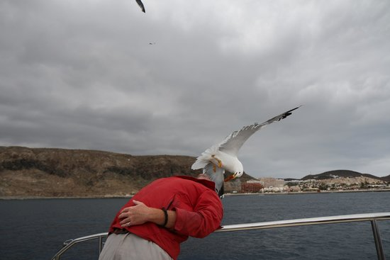 Mustcat: Seagull taking chicken from the guide's mouth!