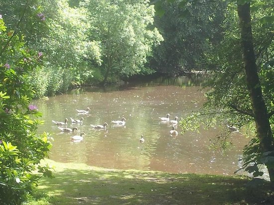 Haddo House & Country Park: Lakes with geese and ducks