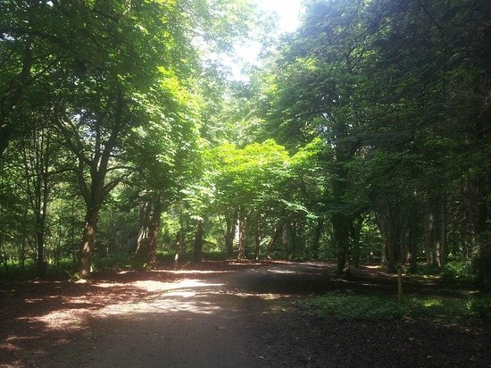 Haddo House & Country Park: Tree Lined paths