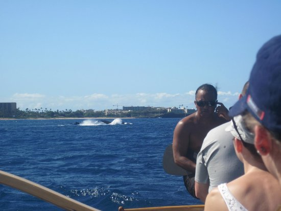 Maui Paddle Sports: Awesome Day!