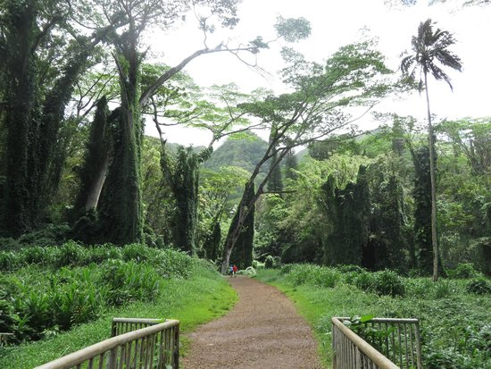 Manoa Falls: Manoa Fall
