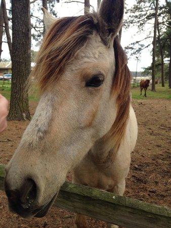 Refuge Inn : pony pen
