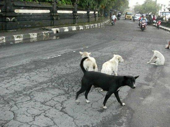 Kintamani Backpackers: ホテルの前。キンタマーニドック