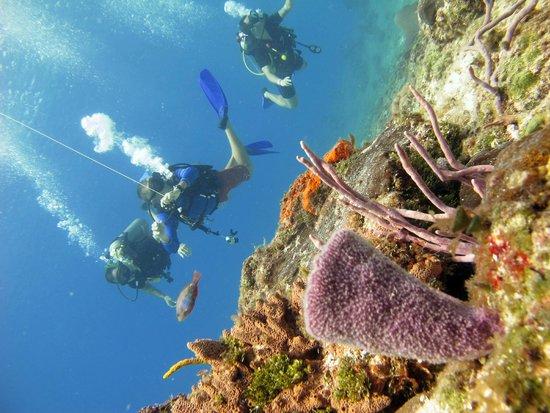Aqua Safari Dive Shop: Corais