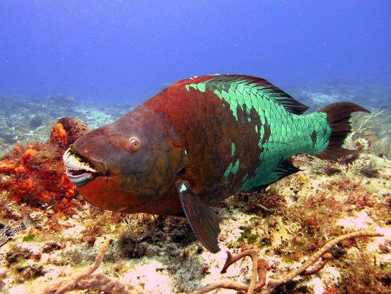 Aqua Safari Dive Shop: Demais