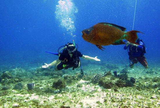 Aqua Safari Dive Shop: Peixo Loro