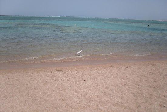 Jaz Mirabel Club : Beach
