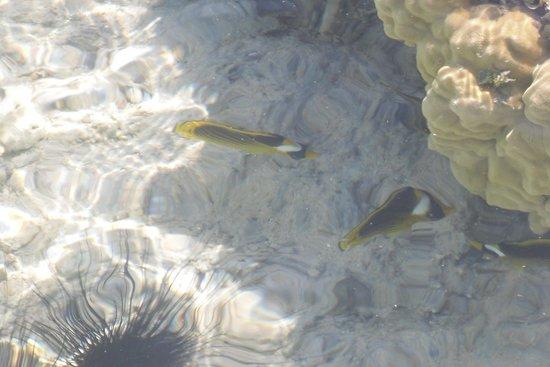 Jaz Mirabel Club : Fish from the Jetty