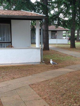 Light All Inclusive Hotel Laguna Park: Seagull walks