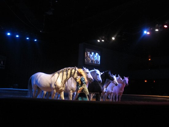 Sable' Equestrian Theater