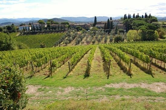 Villa Mangiacane : vineyards