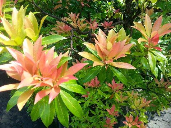 Butchart Gardens : from the Sunken Garden