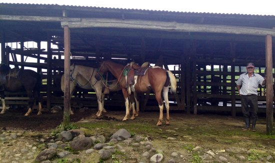 Termales del Bosque: the horses!