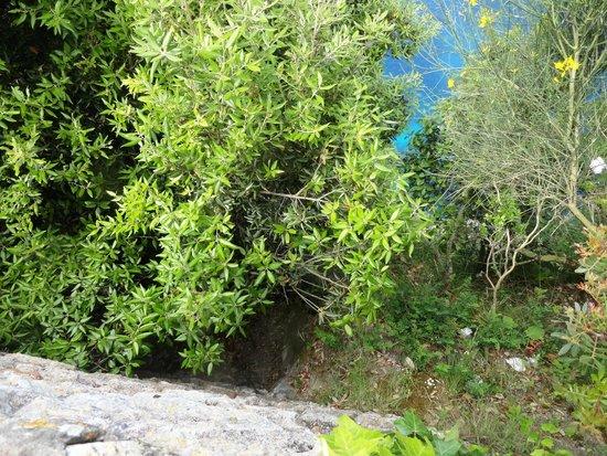 Villa Jovis : Dizem que deste local,muitas amantes de Tibério eram empurradas