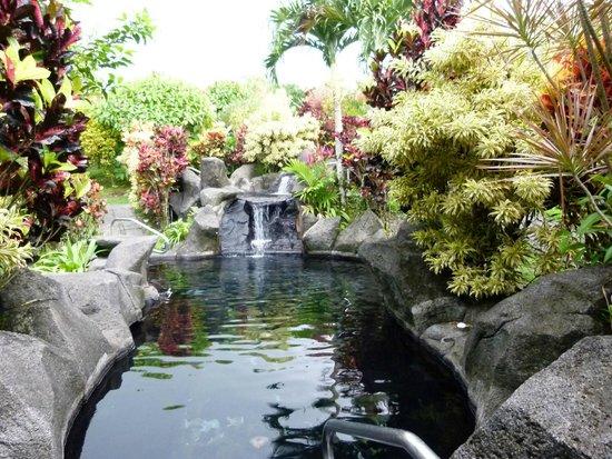 Arenal Kioro Suites & Spa: Kioro hotel springs