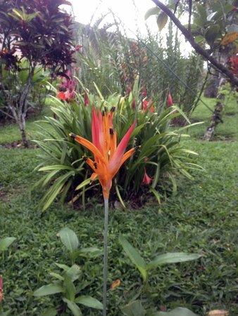 Arenal Kioro: On the grounds