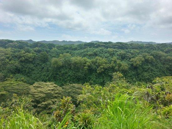 Wailua Falls: tree tops
