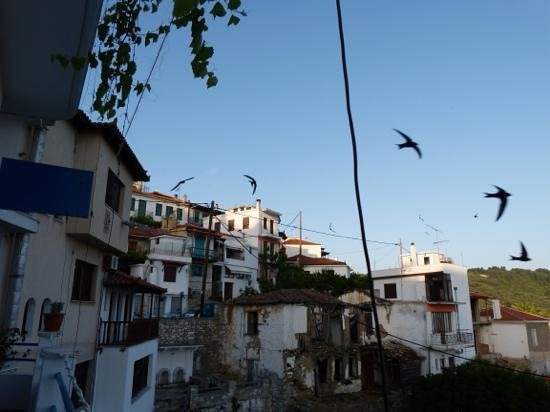 Agnanti Restaurant : swifts whirling around from the balcony at Agnanti