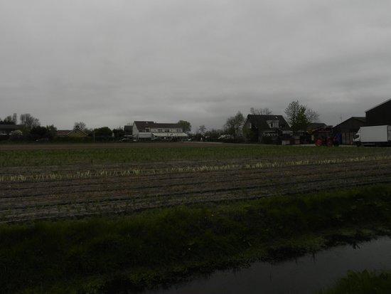 Duinpark De Witte Raaf: Esta era a vista da janela de casa.