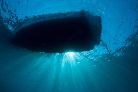 Starfish Diving : Boat