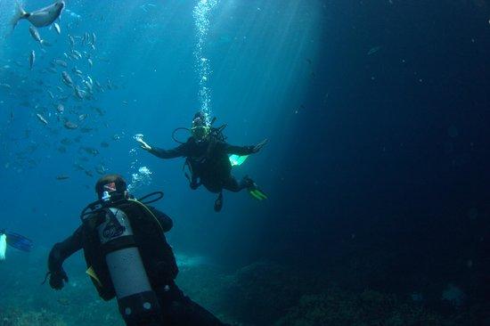 Starfish Diving : Flight........