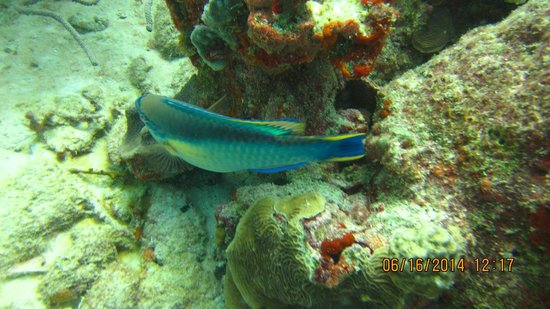 Villa Punta Salina: Just a picture from diving. Do not forget do dive on Aruba
