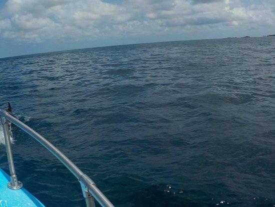 Explora Vallarta: se alcanza a ver un delfin a un costado de la lancha en la punta!!!