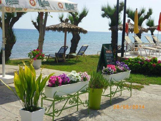 Mimosa Beach Bar : BEACH AREA