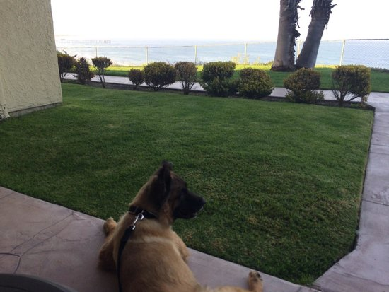 SeaCrest OceanFront Hotel: Our loyal companion on our beach front suite