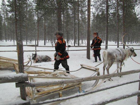 Guesthouse Husky: Reindeer Herders